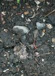生ゴミ堆肥2.JPG